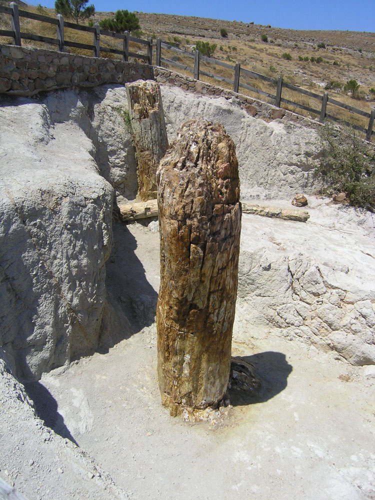 the petrified forest of lesvos The petrified forest of lesvos gives us considerable information regarding the composition and character of the paleoflora and climatic conditions of the distant past thus, this monument constitutes a natural document that has recorded the geological history of the aegean basin of the last 20 million years.