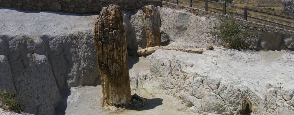 Απολιθωμένος Κορμός