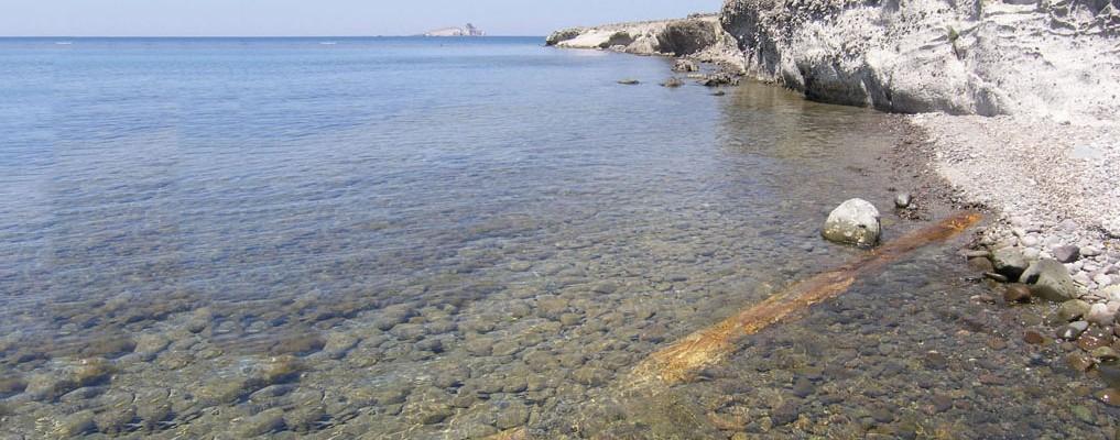 Θαλάσσιος Απολιθωμένος Κορμός