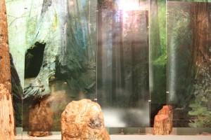 Αίθουσα Απολιθωμένου Δάσους