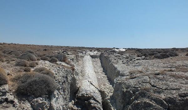 ΔΙΗΜΕΡΙΔΑ ΠΑΡΚΟ ΝΗΣΙΩΠΗΣ: Ανάδειξη απολιθωμάτων και φυσικής κληρονομιάς ως μέσο για την ανάπτυξη βιώσιμου τουρισμού