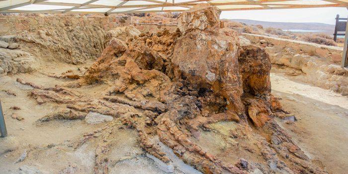 ΠΑΡΑΣΚΕΥΗ 6 ΙΟΥΛΙΟΥ 2018 | Περιήγηση στο Πάρκο Πλάκας Σιγρίου Περίπατος και επιστημονική ενημέρωση σε 50 απολιθωματοφόρες θέσεις του Απολιθωμενου Δάσους!