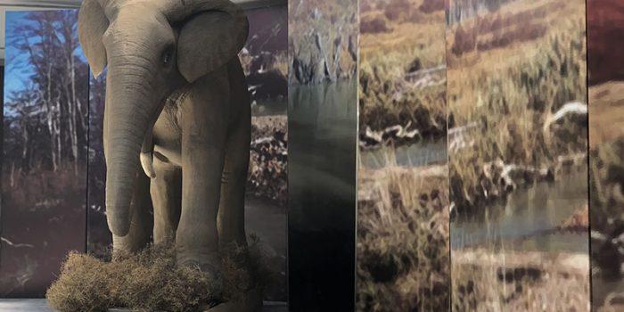 ΤΟ ΔΕΙΝΟΘΗΡΙΟ ΤΗΣ ΛΕΣΒΟΥ Στο Μουσείο Φυσικής Ιστορίας Απολιθωμένου Δάσους στο Σίγρι