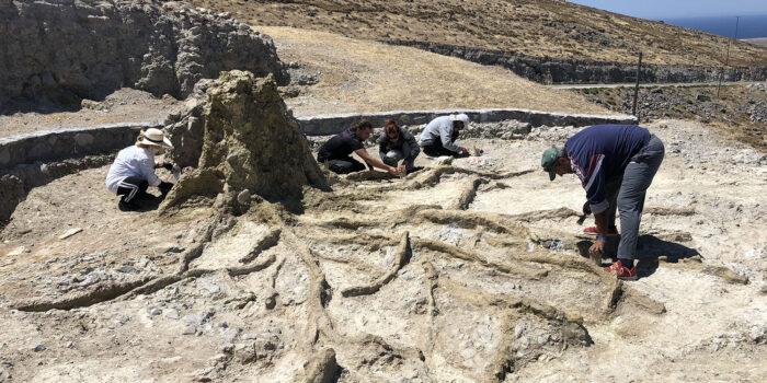 ΑΠΟΛΙΘΩΜΕΝΟ ΔΑΣΟΣ ΛΕΣΒΟΥ</br>Σωστικές επεμβάσεις για την προστασία  των απολιθωμάτων κατά μήκος  του νέου οδικού άξονα Καλλονής – Σιγρίου