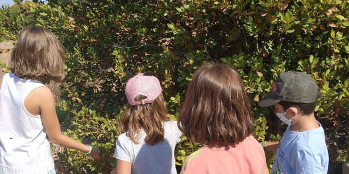 ΕΥΡΩΠΑΪΚΕΣ ΗΜΕΡΕΣ ΠΟΛΙΤΙΣΤΙΚΗΣ ΚΛΗΡΟΝΟΜΙΑΣ (Ε.Η.Π.Κ.) 2020<br>ΕΚΠΑΙΔΕΥΤΙΚΑ ΠΡΟΓΡΑΜΜΑΤΑ & ΨΗΦΙΑΚΕΣ ΕΚΘΕΣΕΙΣ<br>στo Μουσείο Φυσικής Ιστορίας Απολιθωμένου Δάσους Λέσβου<br>25-27 Σεπτεμβρίου 2020