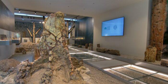 Φθινοπωρινή εξόρμηση στο Απολιθωμένο Δάσος!<br>το Σαββατοκύριακο 24 & 25 Οκτωβρίου 2020<br>Ενημέρωση και περιήγηση στο Μουσείο Φυσικής Ιστορίας Απολιθωμένου Δάσους Λέσβου με ελεύθερη είσοδο