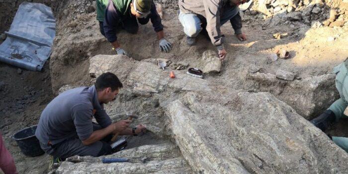 Εντυπωσιακοί 14 απολιθωμένοι κορμοί στο Σίγρι