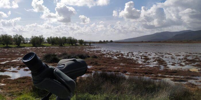 Μεσοχειμωνιάτικες καταμετρήσεις υδρόβιων πουλιών 2021</br>Συνεχίζονται οι καταγραφές ορνιθοπανίδας του Κέντρου Περιβαλλοντικής Ενημέρωσης Καλλονής
