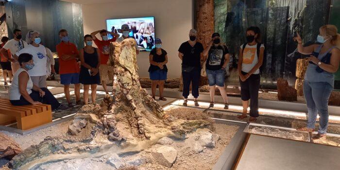 Εθελοντικές εργασίες στο Απολιθωμένο Δάσος Λέσβου από την Εθελοντική Ομάδα του Βριλησσού</br>Εντυπωσιασμένοι οι εθελοντές από τη γνωριμία τους με το Απολιθωμένο Δάσος Λέσβου