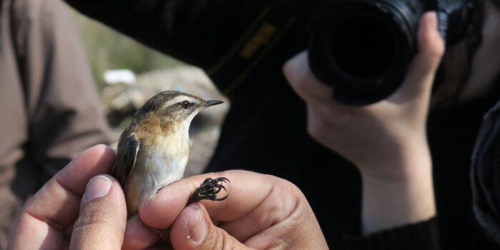 <strong>Εξόρμηση παρατήρησης και δακτυλίωσης πουλιών</br>Φθινόπωρο στον καλαμιώνα της Γέρας!