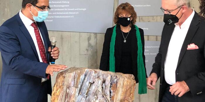 Παράταση λειτουργίας της μεγάλης έκθεσης του Απολιθωμένου Δάσους στη Φρανκφούρτη