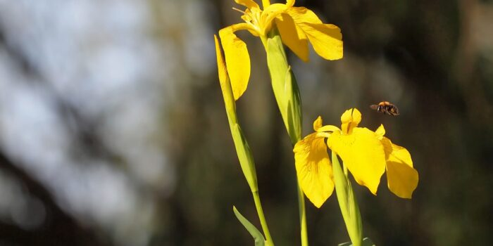 Τα φυτά των υγροτόπων της Λεσβου
